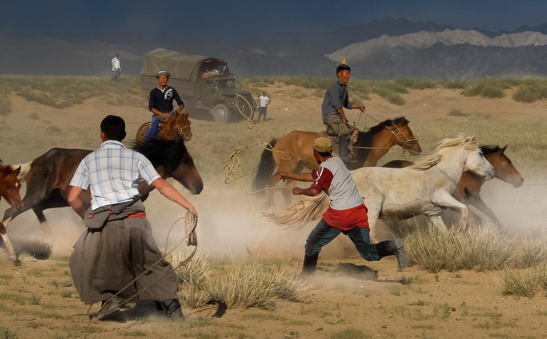 Znalezione obrazy dla zapytania konie w mongolii